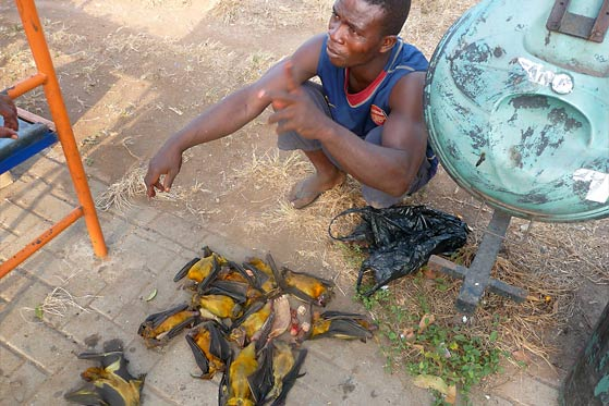 Batmeat for sale, Ghana - Photo: Alexandra Mannerings