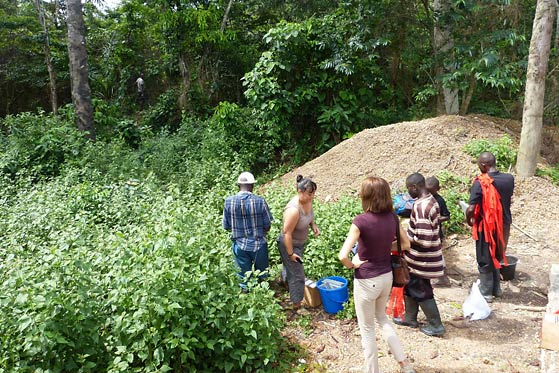 Setting up rodent traps in the mining area, Sierra Leone - Photo: Gianni Lo Iacono